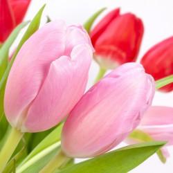 tulips-618575_960_720